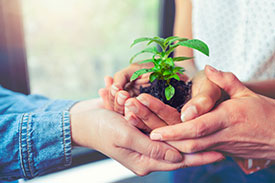Image of a small plant growing in a pot representing social responsibilty.